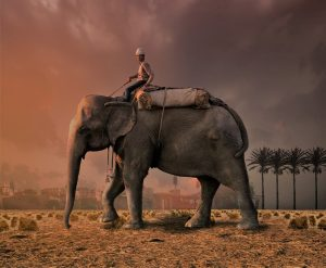 olifant in communicaie